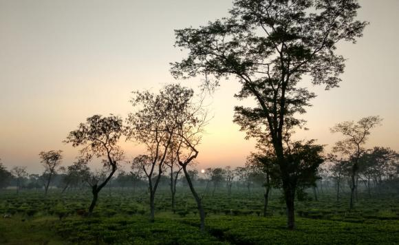 Chandipur Tea Estate