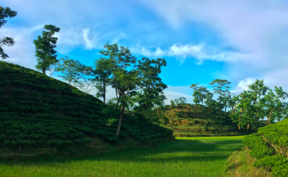 Aenakhal Tea Estate